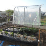 裏庭家庭菜園